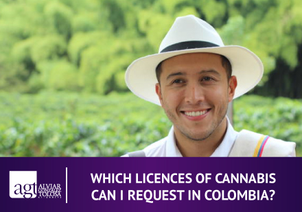 Colombian Guy With Cannabis Lands