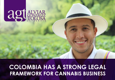 Colombian Guy With Cannabis Crops Behind